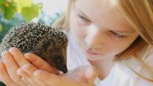Physical Characteristics of a Hedgehog