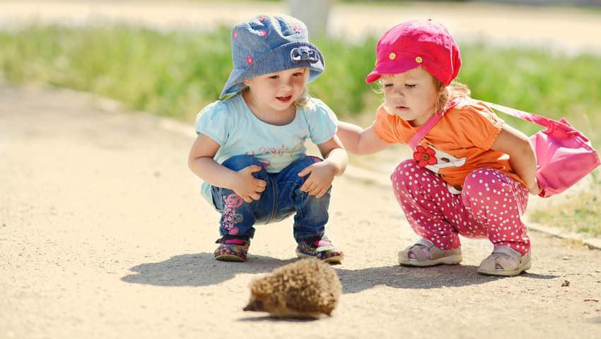 Hedgehog Outdoor Play